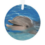 Cute Chattering Dolphin Ornament