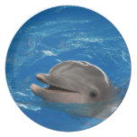 Lovable Dolphin Plate