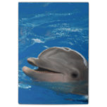 Lovable Dolphin Post-it Notes