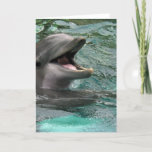 Talking Dolphin Greeting Cards