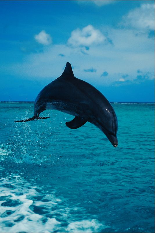 Dolphin Photo Gallery