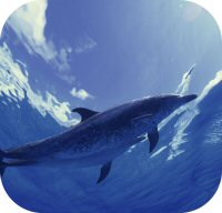 Dolphin Sound Photos